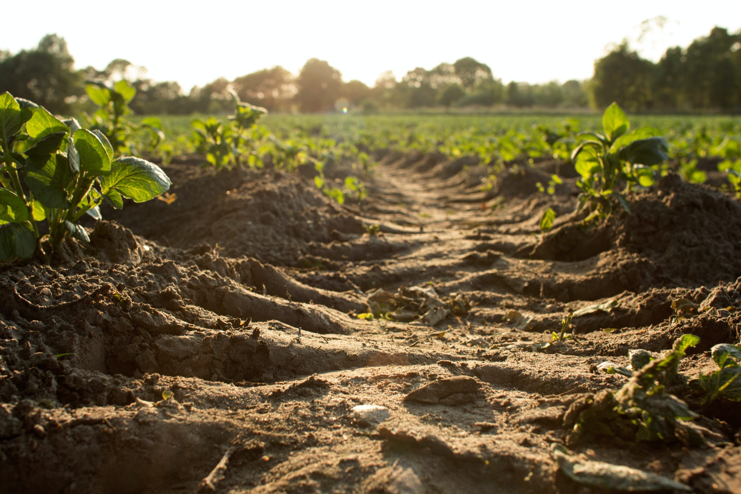 074: Soil Capital's Andrew Voysey: Finance, Farming, and the vision of Regenerative Agriculture